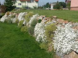zahrada-tilia